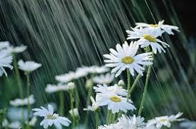 Resultado de imagem para chuva bonita