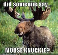 moose knuckle quotes on Pinterest | Moose, Camels and Toe via Relatably.com