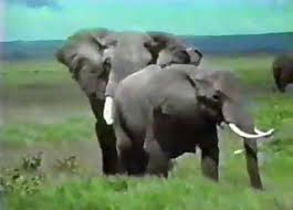 Animals Sex Elephants Lions Porn Videos / Most popular Page 1