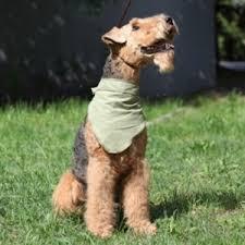<b>Охлаждающая косынка</b> OSSO Fashion для <b>собак</b> ...