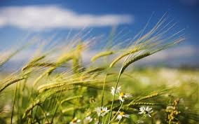 Image result for picture of the wind