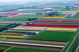 المناظر الطبيعية في هولندا Images?q=tbn:ANd9GcTD7Hj6W8O0Q3-5YUQozkm6j7VnBm09V8jtjNt1C6jFc7CfHpgqlw