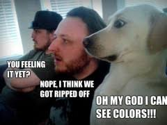 Frightened Dog | WeKnowMemes via Relatably.com