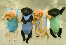 Image result for cute dogs on Tuesday