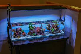 reef aquarium offices and aquarium on pinterest aquarium office