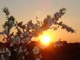 Matin en prières (27 Mars) Seigneur donne moi Ta divine Douceur Images?q=tbn:ANd9GcTDu-LyltsIwUbBI9llKenIVRQAazIWM2pR53VajMWftRqHOr_D