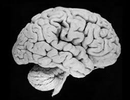 Reduced Gray Matter in Brain May be Responsible for Behavioral Problems in Children According to New Study