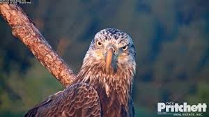 The Eagles Youtube Swfl Eagles Gorgeous Sub Adult Visits Nest Today 111316