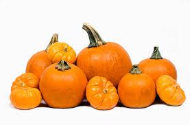 Billedresultat for pumpkins