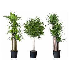 ideas tropical indoor plants home design and decor image of modern home decor country cheap office plants
