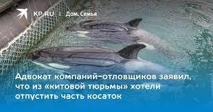 Адвокат компаний-отловщиков заявил, что из «китовой тюрьмы ...