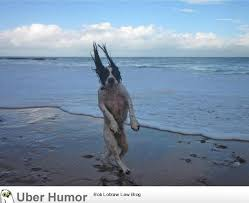 Just a dog going for a walk on the beach… | Funny Pictures, Quotes ... via Relatably.com
