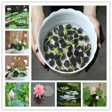 Popular <b>Lotus</b> Water-Buy Cheap <b>Lotus</b> Water lots from China <b>Lotus</b> ...