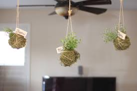 extraordinary hanging indoor plants with herb f garden planter rope also black ceiling fan and white amazing office plants