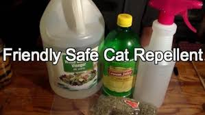 friendly but effective cat repellent cat safe furniture