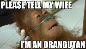 Please tell my wife | Dying Orangutan | Know Your Meme via Relatably.com