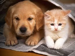 Κανάλι αφιερωμένο σε σκύλους και γάτες από την British Airways...