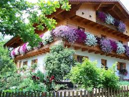 Cvijeće oko kuće  - Page 2 Images?q=tbn:ANd9GcTFrF8WJiavW02RyOYPev_PaIaKf5vDnfRnUNNfsMXRv4UcmdBX7A