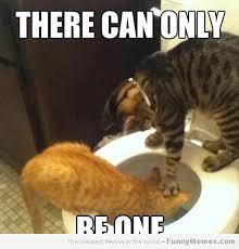 Résultats de recherche d'images pour «cat meme»