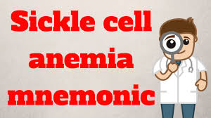 sickle cell anemia essay example scd discussing the relationship between structure and function for sickle cell anemia mnemonic