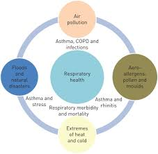 climate change and respiratory diseases european respiratory society figure