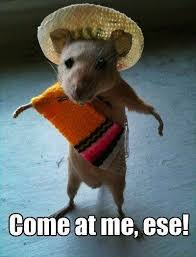 Speedy Gonzales on Pinterest   Looney Tunes, Bugs Bunny and Daffy Duck via Relatably.com