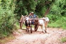 Image result for images of bullock cart on the road