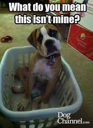 What do you mean this isn't mine? | Dog Fancy | Dog Memes ... via Relatably.com