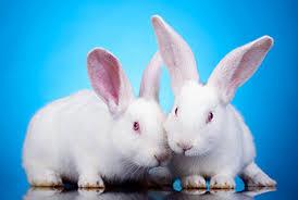 International Rabbit Day 2019 - Sep 28, 2019