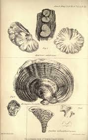 best images about charles darwin natural history charles darwin illustrations google search