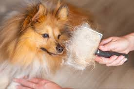 The 51 Best Brushes & Tools for Deshedding <b>Dogs</b> - Pet Life Today