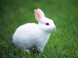 Resultado de imagen de conejita animal