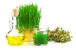 Výsledek obrázku pro olej s pšeničných klíčků
