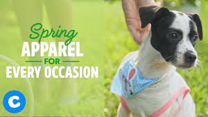 <b>Spring Dog Apparel</b> You and Your Dog Need | Chewy - YouTube