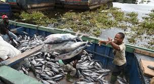 At <b>Ocean</b> Conference, UN agencies commit to cutting harmful <b>fishing</b> ...