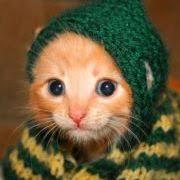 Kalli Kittenli (kallicat) on Pinterest
