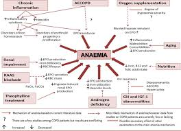 anemia conclusion essay anaemia in chronic obstructive pulmonary disease an insight into figure