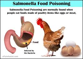 Image result for salmonella symptoms