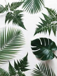 86 <b>Top Feng</b> shui images in 2019   Plant decor, Indoor plants ...