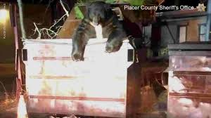Clumsy <b>bear</b> stuck in dumpster rescued by deputies