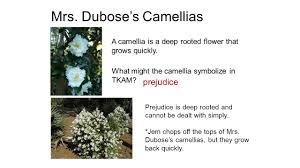 flower symbolism tkam flower symbolism in tkam miss maudie s mrs dubose s camellias what might the camellia symbolize in tkam
