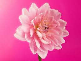 Flor hermosa con mensaje imagen