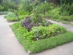 Small Picture 70 best Growing Herbs in the Garden images on Pinterest Growing