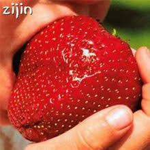 Popular <b>Strawberry</b> Tree-Buy Cheap <b>Strawberry</b> Tree lots from ...
