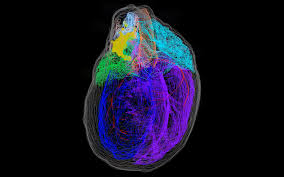 3D <b>map of a heart's</b> 'brain' | Engadget