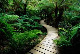 Image result for tree on a path