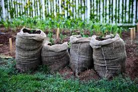 <b>Удобрения</b> для картофеля: виды <b>удобрения</b>, благоприятная ...