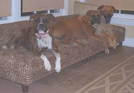 lida sedona bradley on their custom dog bed sofa big dog furniture