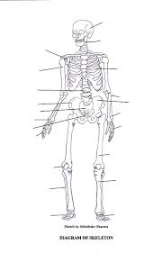 labeled skeletal system diagramprintable skeleton diagram   print to label