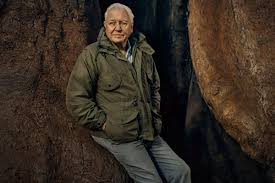 BBC, PBS to launch new David Attenborough-fronted <b>plant series</b>
